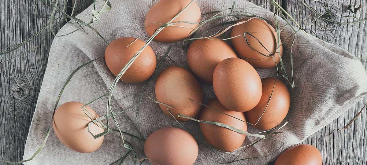 Compromiso con el bienestar animal: apostamos por los huevos de gallinas libres de jaulas
