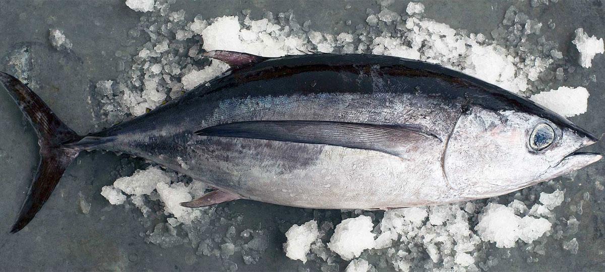 Pescado azul: gran fuente para equilibrar la proporción Omega 3/Omega 6
