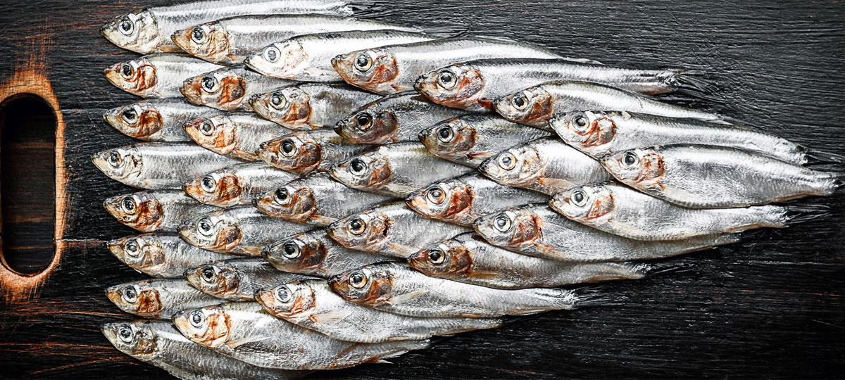 ¿Sardina o anchoa? Diferencias y razones por las que debes comer las dos